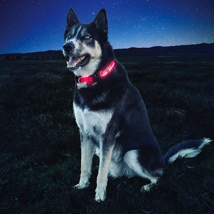 Nite Ize Dawg Collar valgustatud kaelarihm koertele