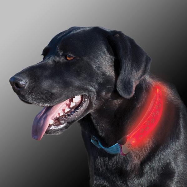 NiteIze Nite Dawg LED kaelarihma valgustus