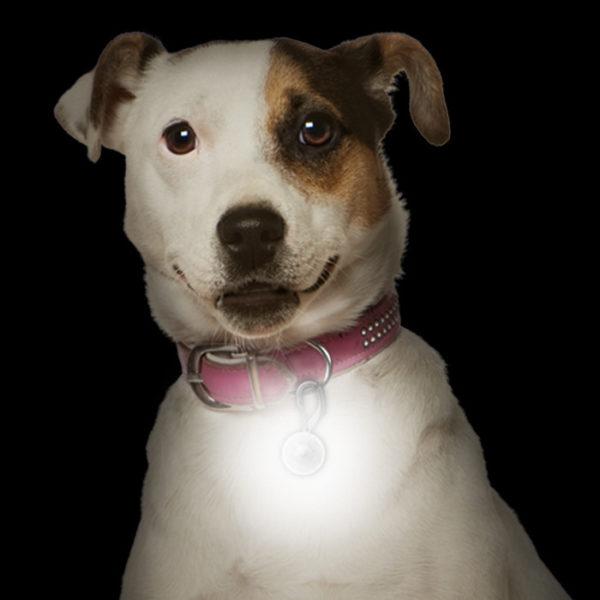 NiteIze PetLit LED ripats lemmikloomale